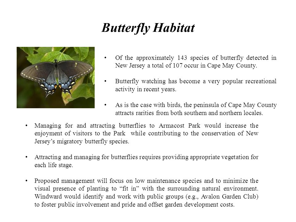 Butterfly Habitat Of the approximately 143 species of butterfly detected in New Jersey a total of 107 occur in Cape May County.
