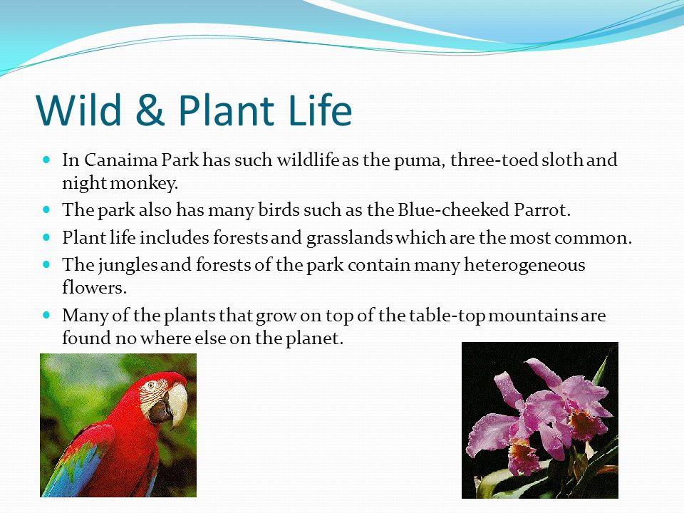 Wild & Plant Life In Canaima Park has such wildlife as the puma, three-toed sloth and night monkey.