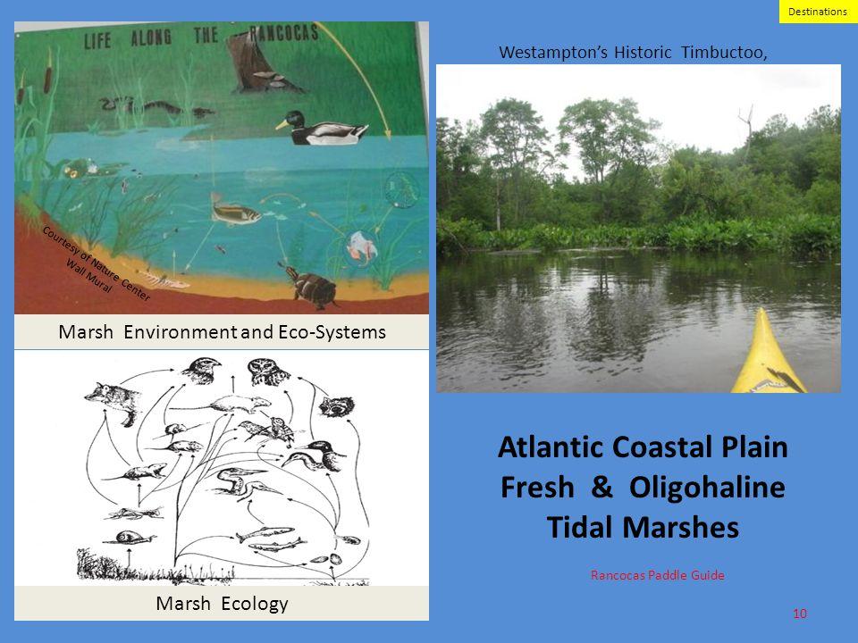 Atlantic Coastal Plain