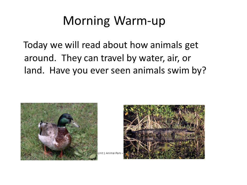 Morning Warm-up Today we will read about how animals get around. They can travel by water, air, or land. Have you ever seen animals swim by