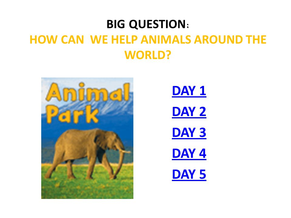Big Question: How can we help animals around the world