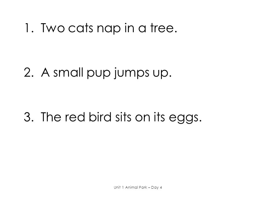 3. The red bird sits on its eggs.