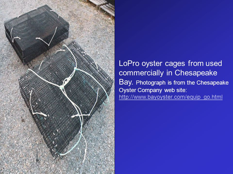 LoPro oyster cages from used commercially in Chesapeake Bay