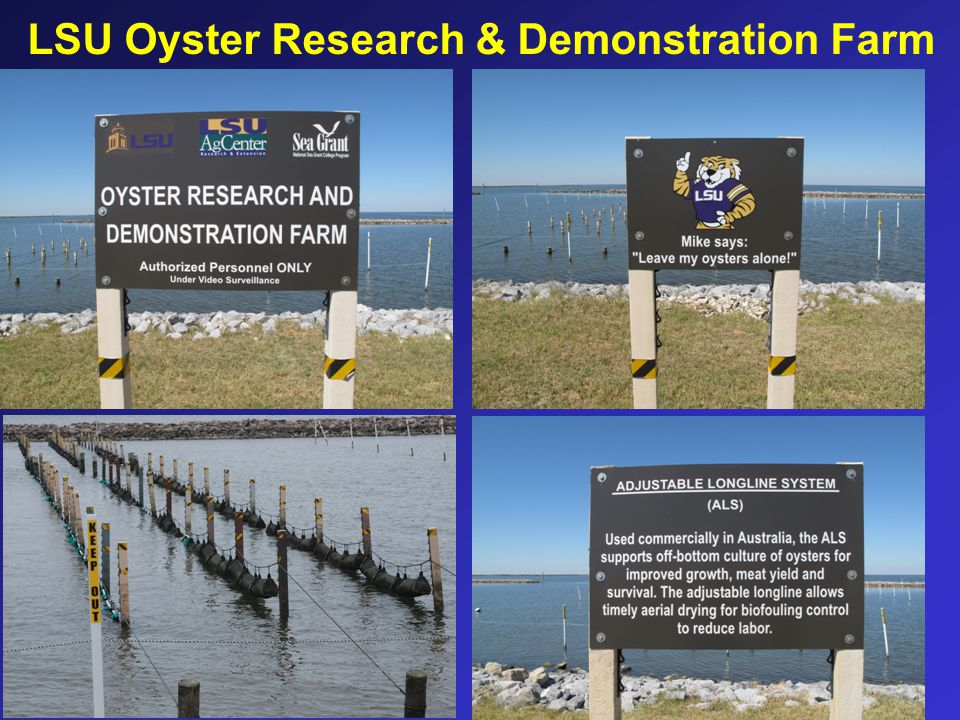 LSU Oyster Research & Demonstration Farm