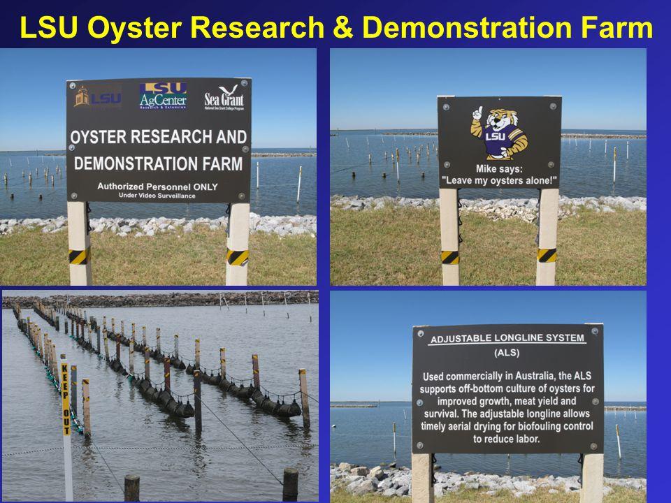 LSU Oyster Research & Demonstration Farm