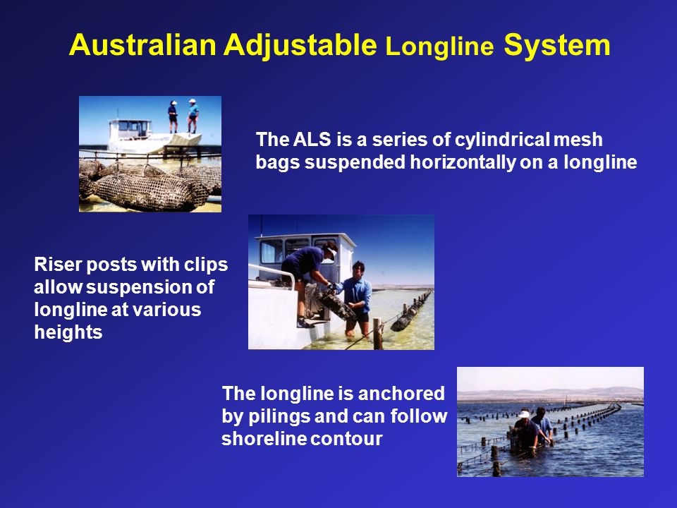 Australian Adjustable Longline System