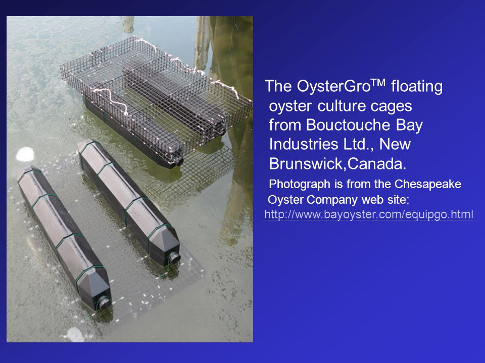 The OysterGroTM floating oyster culture cages from Bouctouche Bay