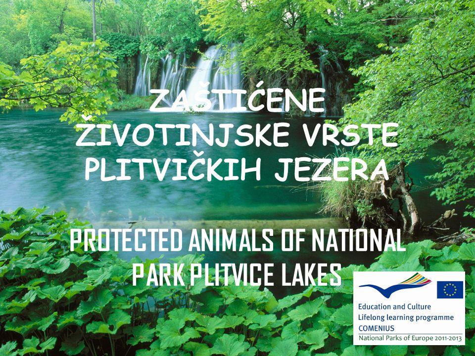 ZAŠTIĆENE ŽIVOTINJSKE VRSTE PLITVIČKIH JEZERA PROTECTED ANIMALS OF NATIONAL PARK PLITVICE LAKES
