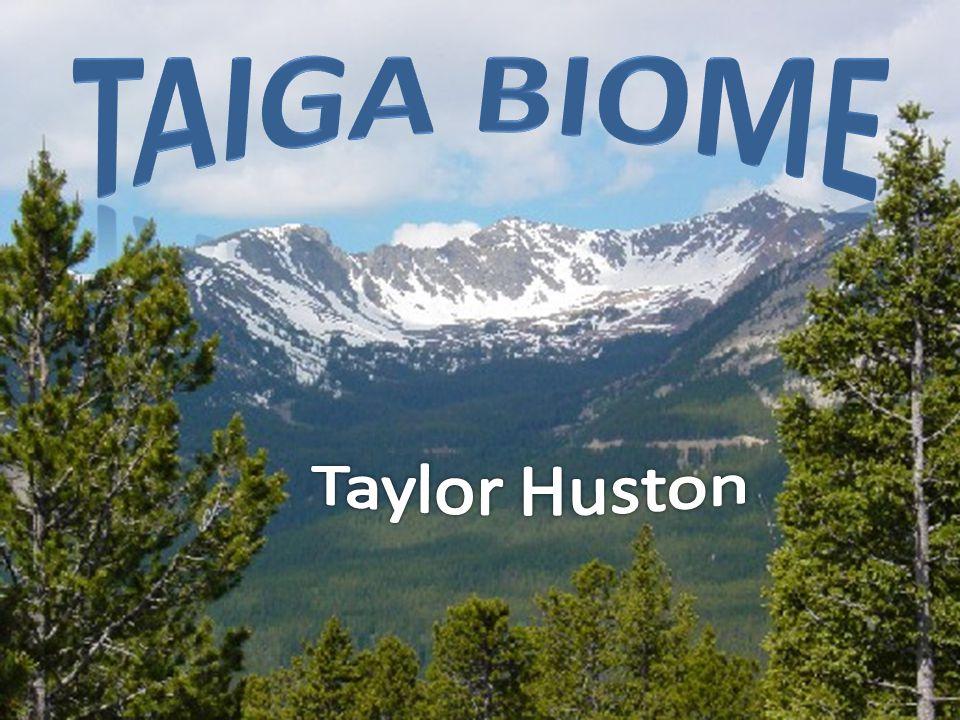Taiga Biome Taylor Huston