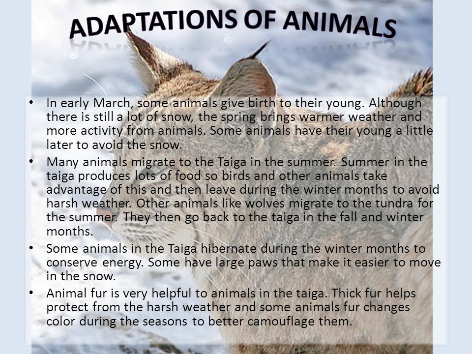 Adaptations of Animals