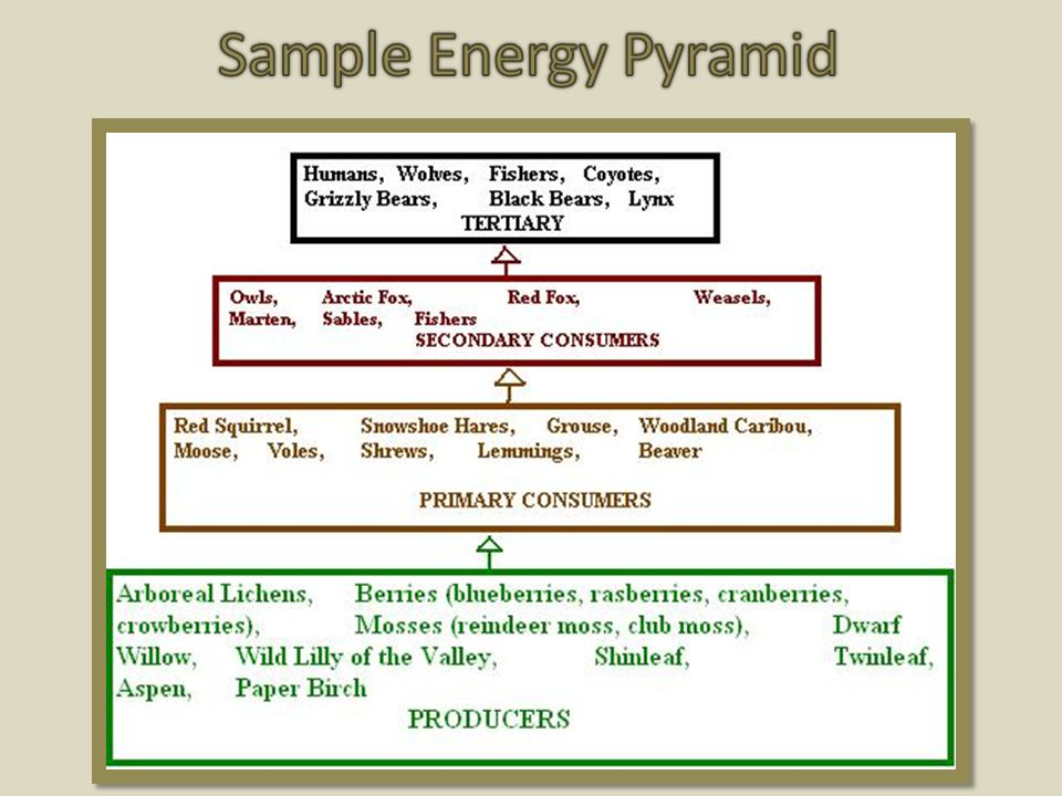 Sample Energy Pyramid