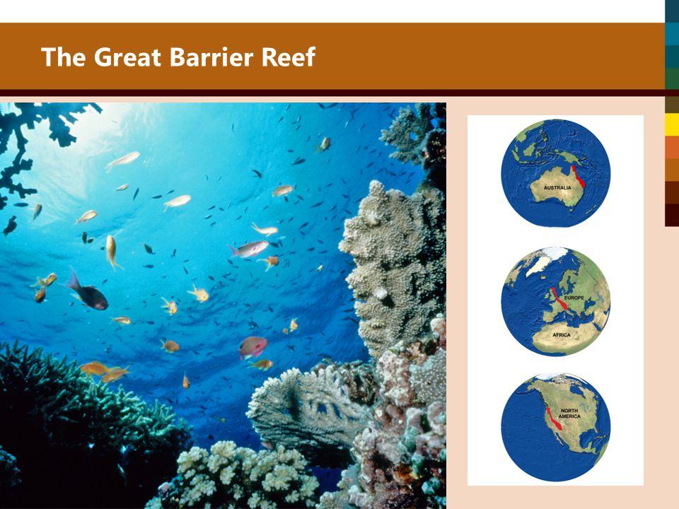 The Great Barrier Reef The Great Barrier Reef