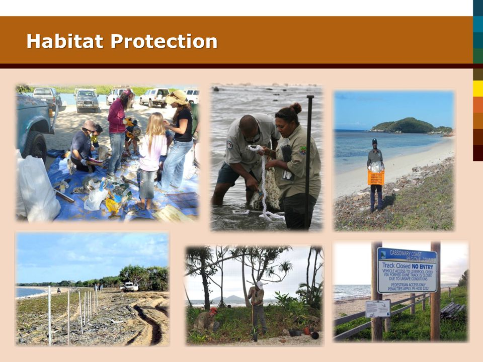 Habitat Protection Notes from LJ Beach Erosion Control