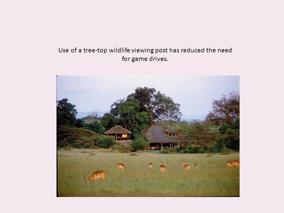 Use of a tree-top wildlife viewing post has reduced the need for game drives.