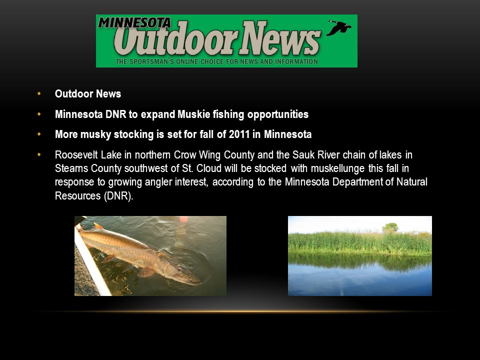 Outdoor News Minnesota DNR to expand Muskie fishing opportunities. More musky stocking is set for fall of 2011 in Minnesota.