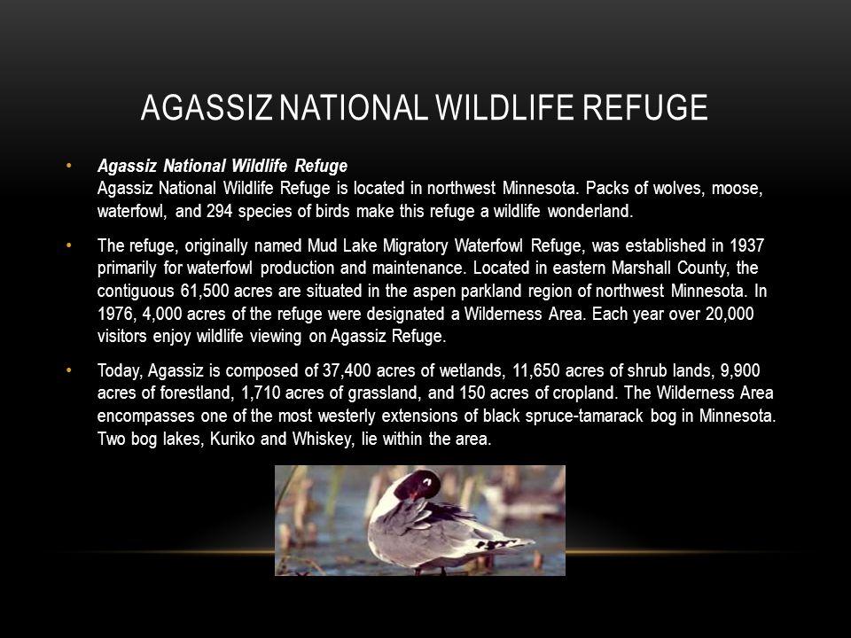 Agassiz national wildlife refuge