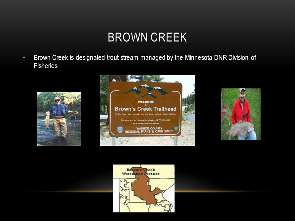 Brown Creek Brown Creek is designated trout stream managed by the Minnesota DNR Division of Fisheries.