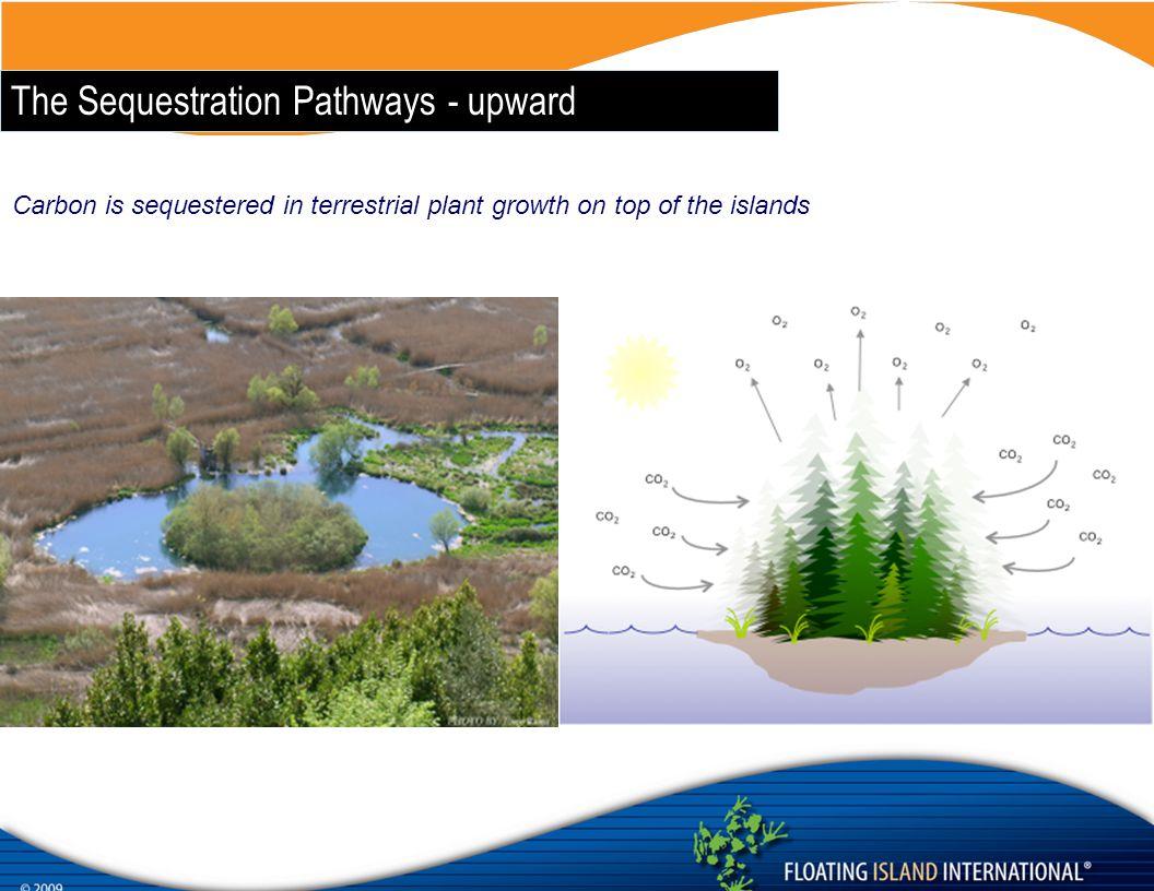 The Sequestration Pathways - upward