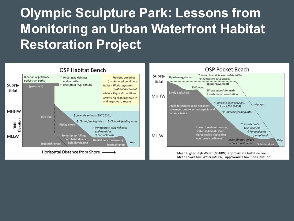 Olympic Sculpture Park: Lessons from Monitoring an Urban Waterfront Habitat Restoration Project