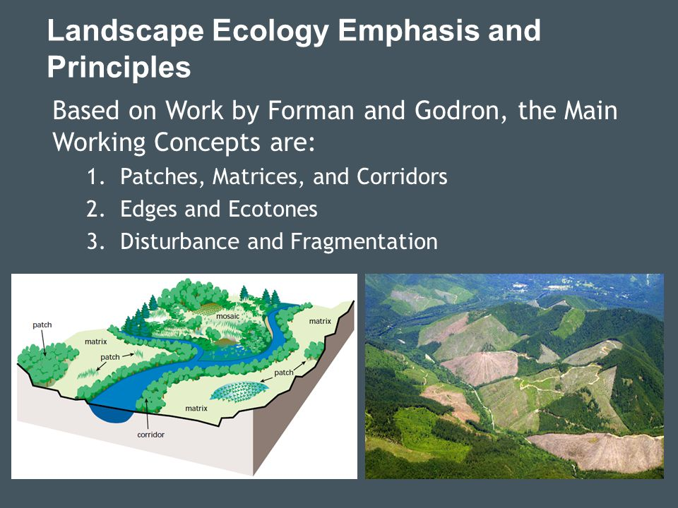 Landscape Ecology Emphasis and Principles