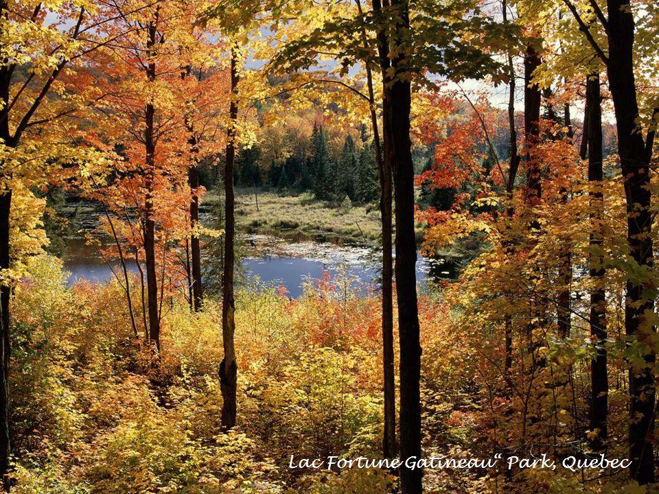 Lac Fortune Gatineau Park, Quebec
