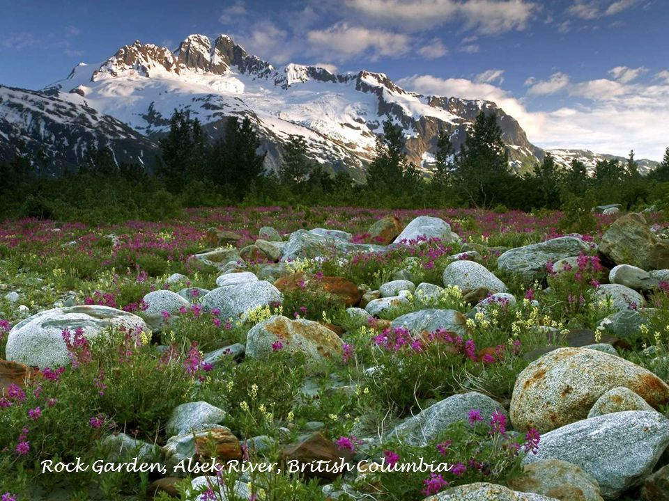 Rock Garden, Alsek River, British Columbia