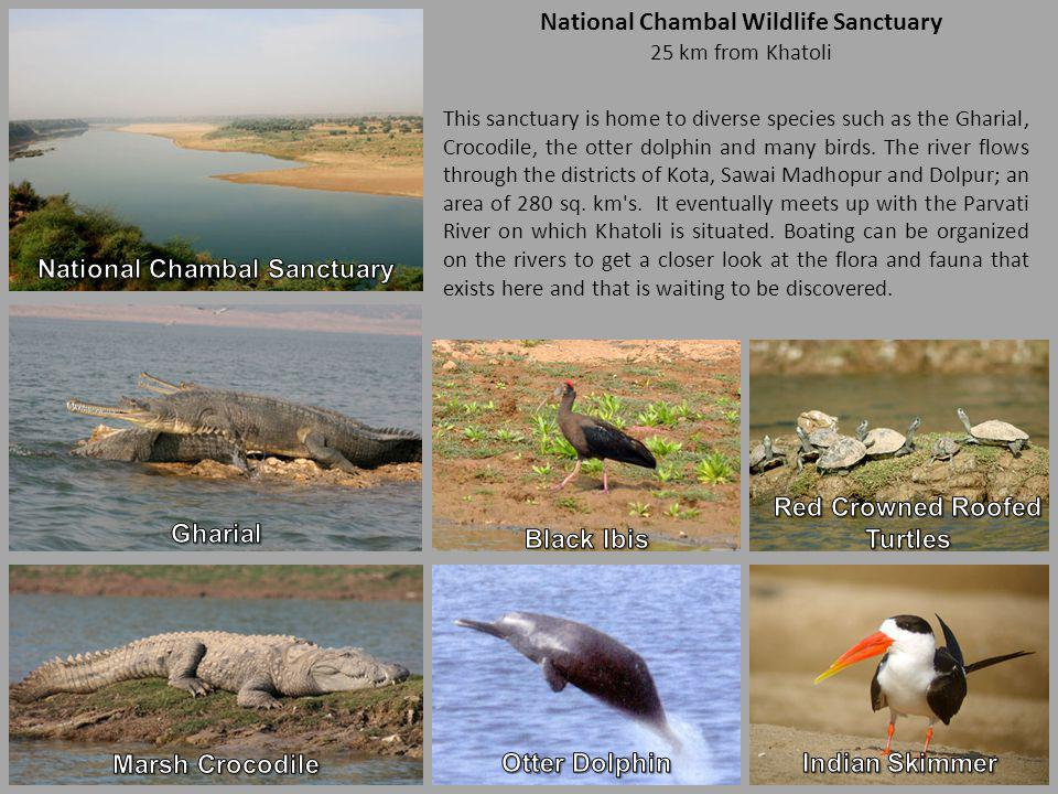 National Chambal Wildlife Sanctuary