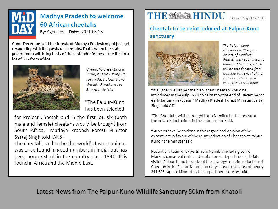 Latest News from The Palpur-Kuno Wildlife Sanctuary 50km from Khatoli