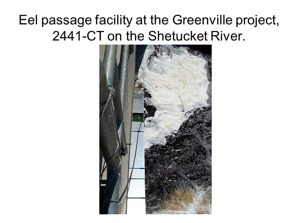Eel passage facility at the Greenville project, 2441-CT on the Shetucket River.