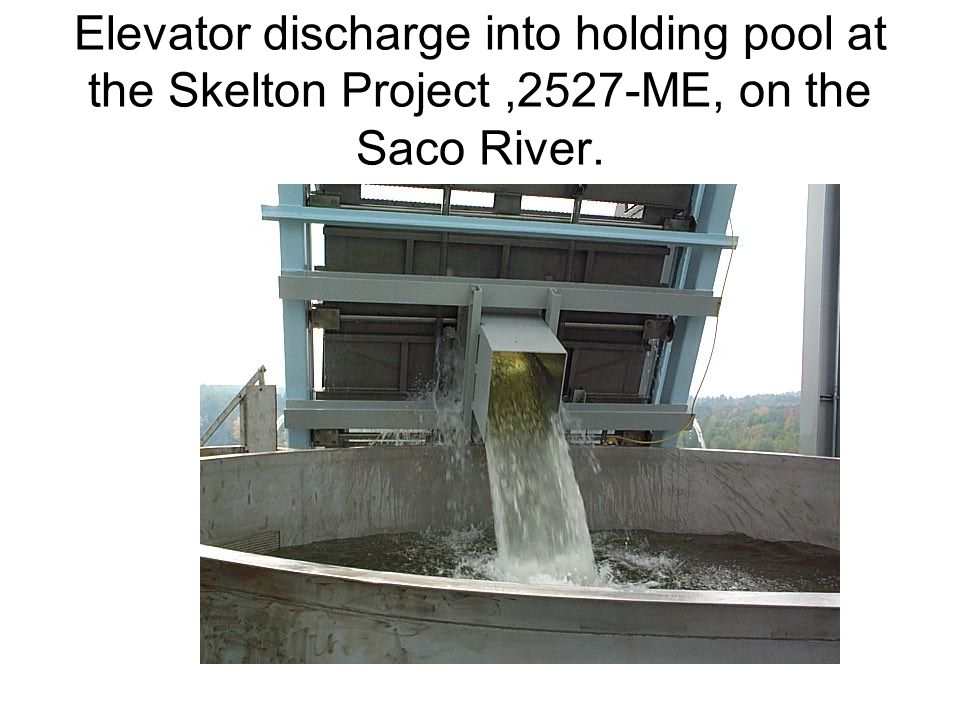 Elevator discharge into holding pool at the Skelton Project ,2527-ME, on the Saco River.