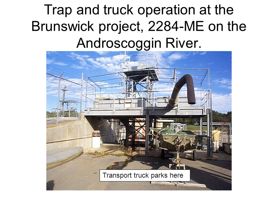 Trap and truck operation at the Brunswick project, 2284-ME on the Androscoggin River.