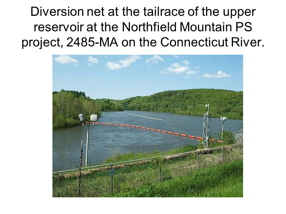 Diversion net at the tailrace of the upper reservoir at the Northfield Mountain PS project, 2485-MA on the Connecticut River.