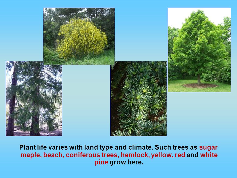 Plant life varies with land type and climate