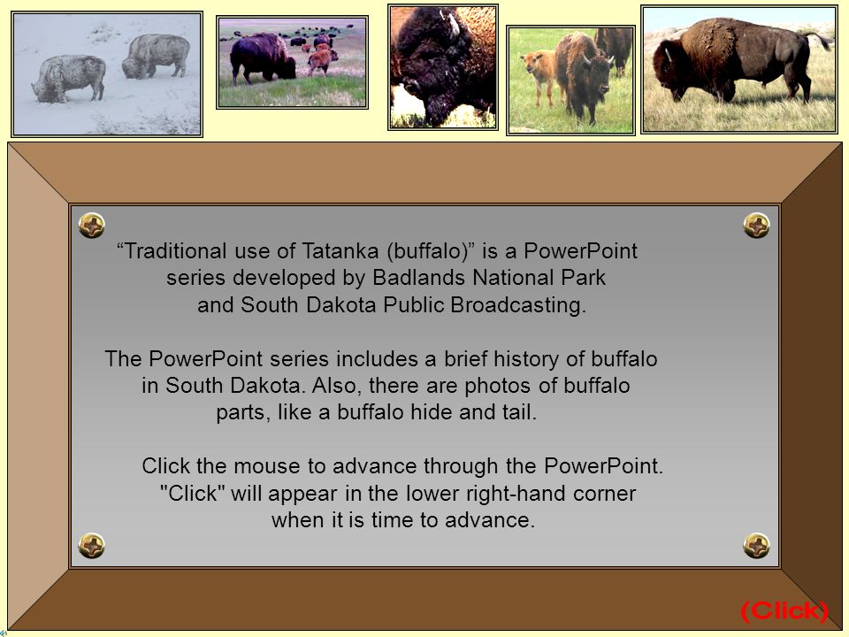 (Click) Traditional use of Tatanka (buffalo) is a PowerPoint