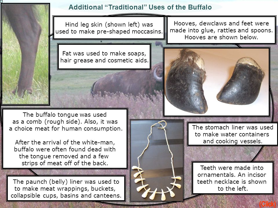 Additional Traditional Uses of the Buffalo