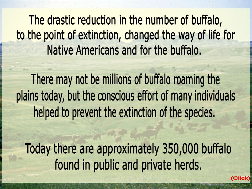 The drastic reduction in the number of buffalo,