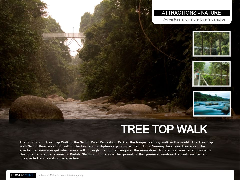 TREE TOP WALK ATTRACTIONS - NATURE