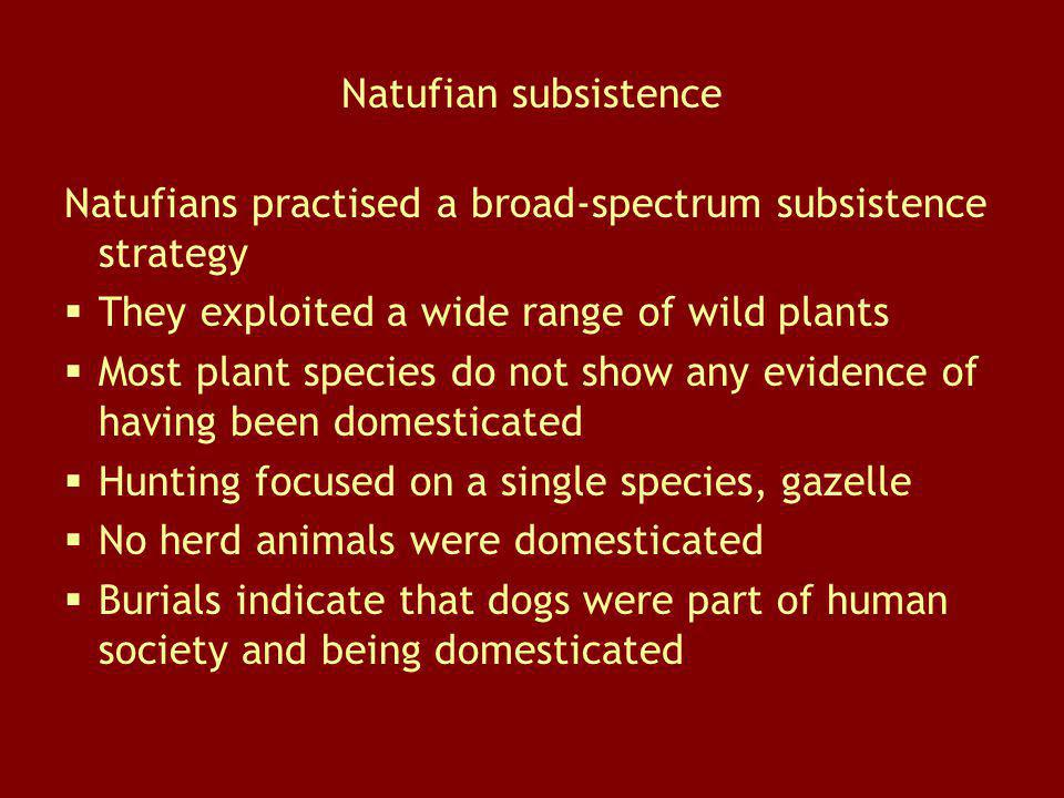 Natufian subsistence Natufians practised a broad-spectrum subsistence strategy. They exploited a wide range of wild plants.