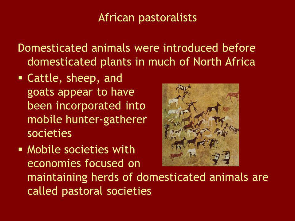 African pastoralists Domesticated animals were introduced before domesticated plants in much of North Africa.