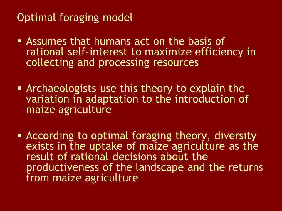 Optimal foraging model