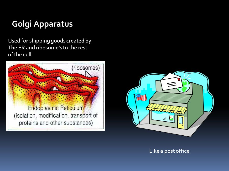 Golgi Apparatus Used for shipping goods created by