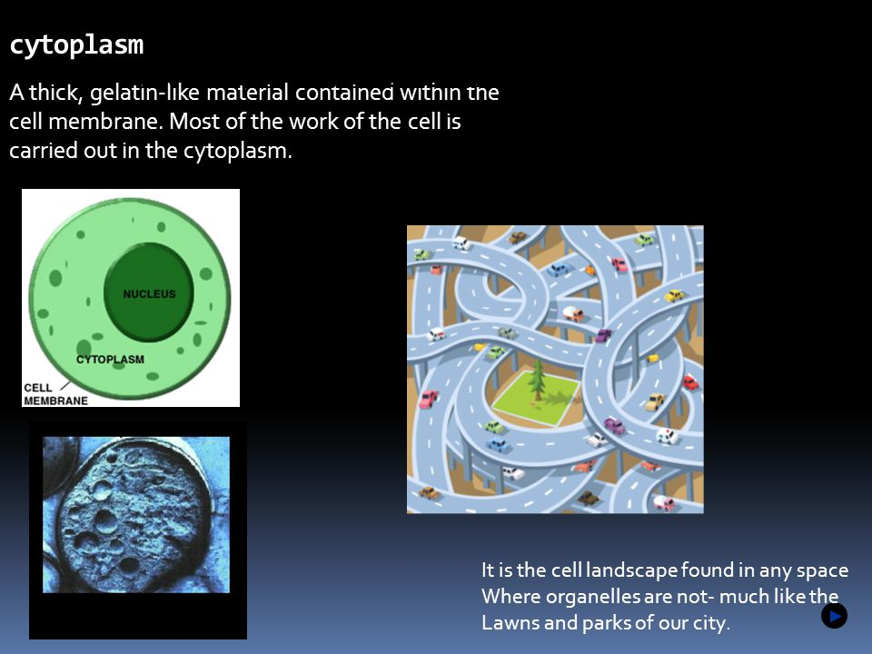 1.2 cytoplasm Microscopes allow us to see inside the cell.