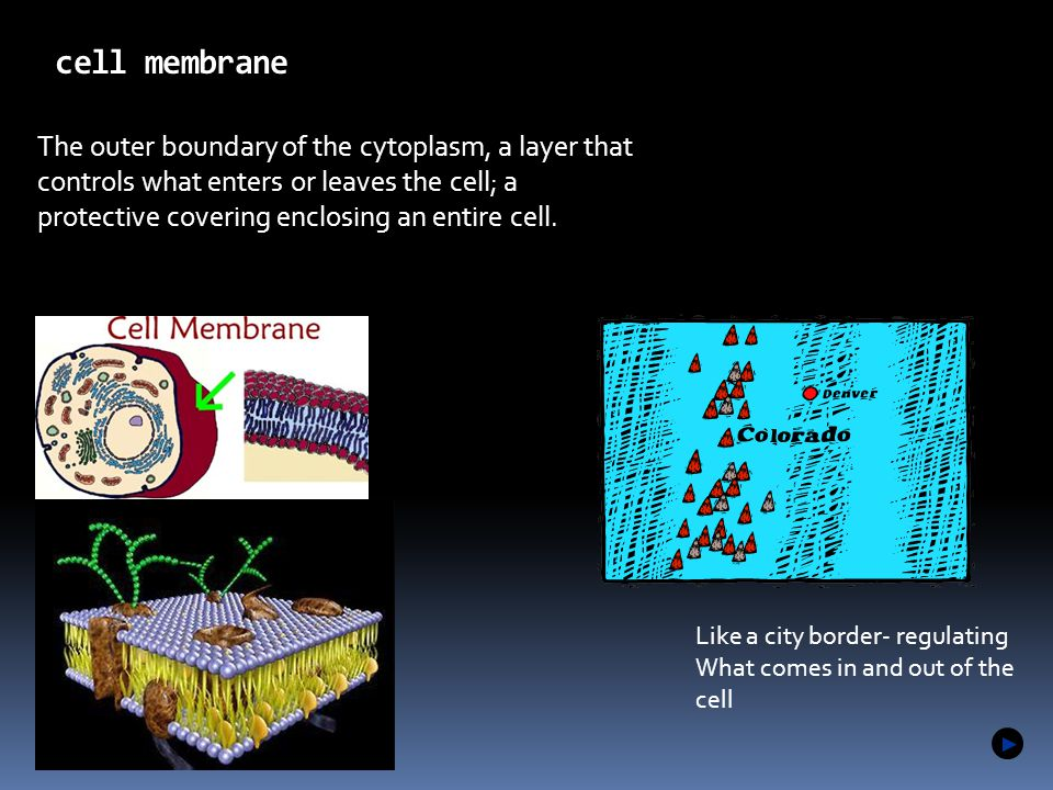 1.2 cell membrane Microscopes allow us to see inside the cell.