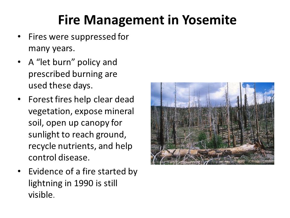 Fire Management in Yosemite