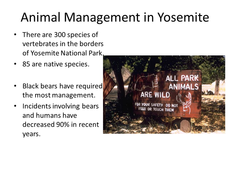 Animal Management in Yosemite