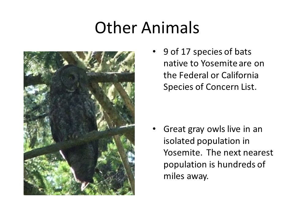 Other Animals 9 of 17 species of bats native to Yosemite are on the Federal or California Species of Concern List.