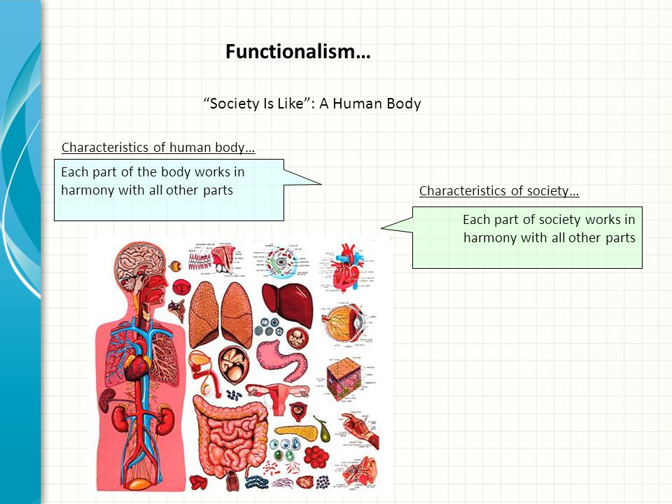 Functionalism… Society Is Like : A Human Body