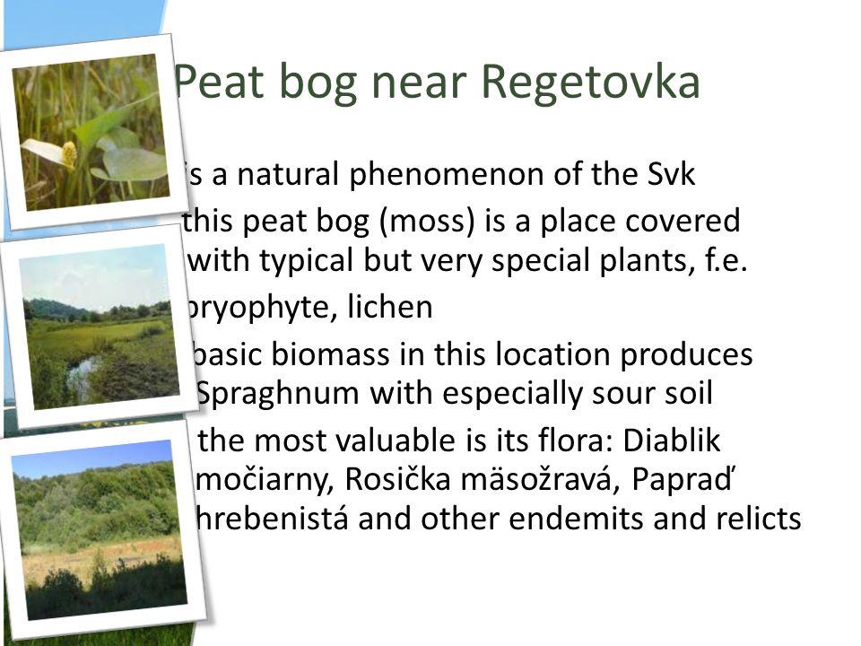 Peat bog near Regetovka