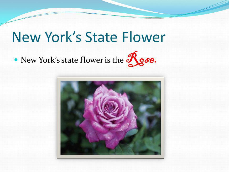 New York's State Flower
