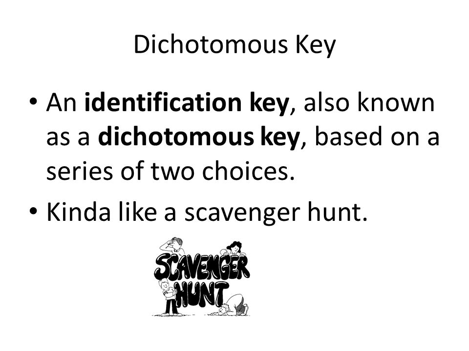 Dichotomous Key An identification key, also known as a dichotomous key, based on a series of two choices.